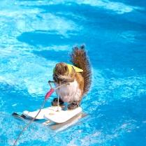 Twiggy the Squirrel